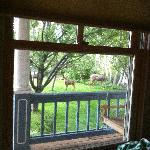 Deer from our window