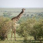 On the Maasai Mara