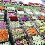 flowers awaiting shipment