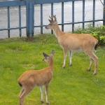 Another photo of deer