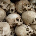 Close up of Skulls