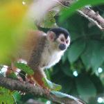Squirrel monkey outside our cabin