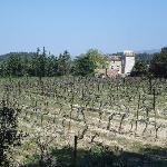 Vineyards next to the chateau