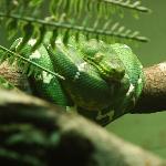 great snake exhibit