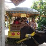 Be serenaded while on a carabao cart