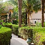 The luxurious garden
