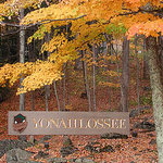 Fall color at Yonahlossee Resort