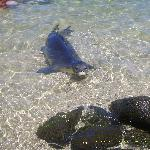 Our friend the Monk Seal