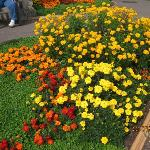 Flower bed - Kew Gardens