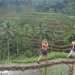 Walk through the rice paddies with explanation about the process of rice growing