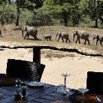 Elephants from the dining deck
