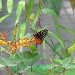 Butterflies in the Rain Forest