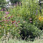 Inside the Butterfly Garden
