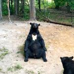 This bear was such a ham, posing for the picture.