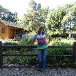 Garden view with duplex cabins in background