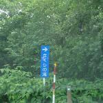 さくらの滝 指示牌