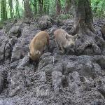 THe wild boars were cute - but VERY smelly!