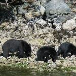 guide took us within 4 metres of bears!
