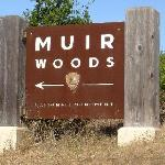 Hwy 1 - Turn off sign for Muir Woods