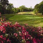 Golfing in Tyler