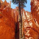 Cool tree enveloping dead tree