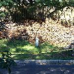 bush pile off parking lot