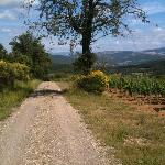 one of the walking paths, which dips down the hill from these vineyards into the woods below