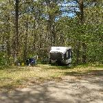 Popup Camper with large RV privacy screened by Sweetwater's Native Cape Cod Forest