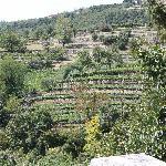 The vineyard at Novaia's