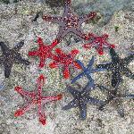 stelle marine alla barriera corallina fronte spiaggia