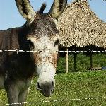 Donkeys at Table Rock
