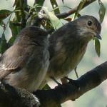 Local lovebirds