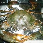 Massive 4kg Mudcrab Clearwater Guests requested it be cooked in our famous Chilli Sauce