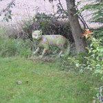 The Wildcat Experience-bild