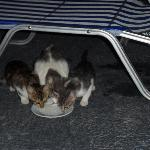 Supper for the cats