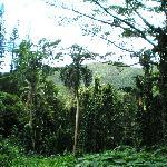 Monoa falls hike