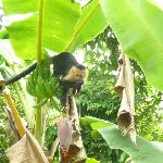 Titis in the banana trees near the carpark
