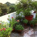 The amazing roof top garden.