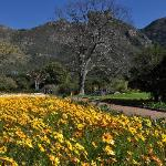 Spring at Kirstenbosch