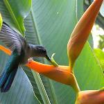 Hummingbird at the Dining Room