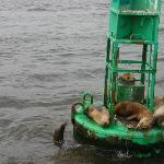 Some cute sealions on the way back in