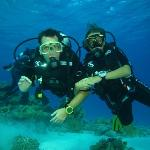 Diving with Sinai Blues