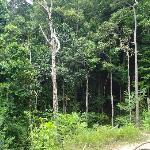 Nice jungle trek