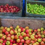 Harvest season in Apple Hill