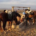lieu d'abeverage dans le desert a cheval