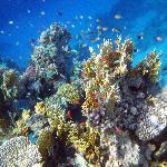 lovely reef
