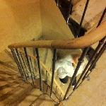 крутая  узкая лестница до номеров 104 и 105. с чемоданом нереально забраться