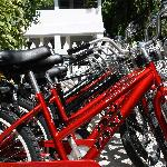 Bicycle Rentals On Site
