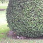 Die Eichhörnchen waren zahlreich und nett zu beobachten beim vergraben der Wintervorräte.