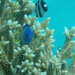 色んな熱帯魚がいます